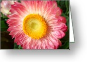 Straw Framed Prints Greeting Cards - Bold and Beautiful Greeting Card by Kathy Bucari