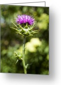 Green Artichoke Greeting Cards - Bold Artichoke Thistle Greeting Card by Kelley King