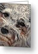 Pets Greeting Cards - Bolognese Breed Greeting Card by Enzie Shahmiri