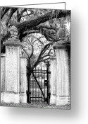 Cemetery Gate Greeting Cards - Bonaventure Cemetery BW Greeting Card by William Dey