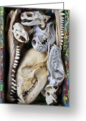 Sharp Teeth Greeting Cards - Bone Box Greeting Card by Garry Gay