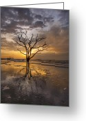 South Carolina Beach Greeting Cards - Boneyard Sunrise Greeting Card by Joseph Rossbach