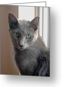 Cat Profile Greeting Cards - Bonnie Greeting Card by James Steele