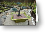 Plant Sculpture Greeting Cards - Bonsai Tree Green Medium Greeting Card by Scott Faucett