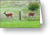 Buddies Greeting Cards - Bookend Twin Bucks Greeting Card by Will Borden