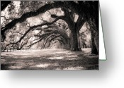 Shadows Greeting Cards - Boone Hall Plantation Live Oaks Greeting Card by Dustin K Ryan