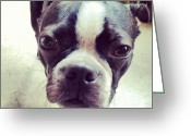 Petstagram Greeting Cards - #bostonterrier #petstagram #gus Greeting Card by Melissa Torres
