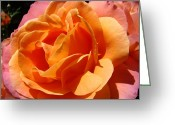 Popular Framed Prints Greeting Cards - Botanical art prints Vibrant Orange Rose Flower Greeting Card by Baslee Troutman Fine Art Prints