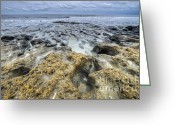 South Carolina Beach Greeting Cards - Botany Bay Beach SC Greeting Card by Dustin K Ryan