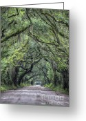 Live Oak Trees Greeting Cards - Botany Bay Country Road Greeting Card by Dustin K Ryan
