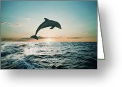 Bottle-nosed Dolphin Greeting Cards - Bottle-nose Dolphin (tursiops Truncatus) Breaching, Silhouette Greeting Card by Steve Bloom