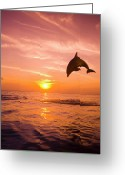 Bottle-nosed Dolphin Greeting Cards - Bottlenose Dolphin (tursiops Truncatus) Jumping Out Of Water, Sunset Greeting Card by Rene Frederick
