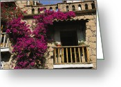 Of Buildings Greeting Cards - Bougainvillea Flowers On The Balcony Greeting Card by Gina Martin