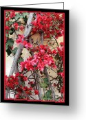 Stucco Walls Greeting Cards - Bougainvillea on Mission Wall - Digital Painting Greeting Card by Carol Groenen