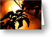Bougainvillea Greeting Cards - Bougainvillea Sunset Greeting Card by Chris Brannen