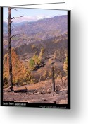 The Lightning Man Greeting Cards - Boulder County Wildfire 5 Miles West of Downtown Boulder Greeting Card by James Bo Insogna