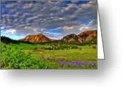 Colorado Mountains Greeting Cards - Boulder Spring Wildflowers Greeting Card by Scott Mahon