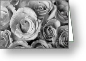 Bouquet Of Roses Greeting Cards - Bouquet of Roses with Water Drops in Black and White Greeting Card by James Bo Insogna