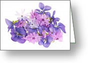 Above Greeting Cards - Bouquet of spring flowers Greeting Card by Elena Elisseeva