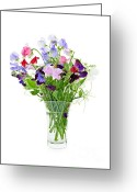 Water Bloom Greeting Cards - Bouquet of sweet pea flowers Greeting Card by Elena Elisseeva