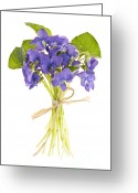 Flora Greeting Cards - Bouquet of violets Greeting Card by Elena Elisseeva