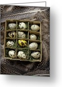 Quail Greeting Cards - Box of quail eggs Greeting Card by Garry Gay