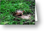 Antlers Greeting Cards - Box Turtle  Greeting Card by The Kepharts