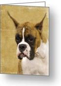 Boxer Greeting Cards - Boxer Greeting Card by Rebecca Cozart