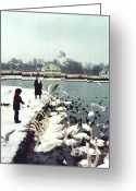 Nymphenburg Greeting Cards - Boy Feeding Swans- Germany Greeting Card by Nancy Mueller