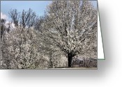 Bradford Greeting Cards - Bradford Pears and a Bench Greeting Card by Kristin Elmquist