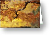 Japanese Maple Greeting Cards - Branch Of Japanese Maple In Autumn Greeting Card by Benjamin Torode
