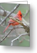 Noth Greeting Cards - Branch Greeting Card by Toshihide Takekoshi