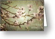 Pink Flower Branch Greeting Cards - Branches Bloom Greeting Card by Andrea Hazel Ihlefeld