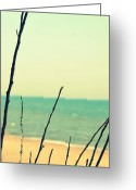 Beachy Greeting Cards - Branches on the Beach Greeting Card by Michelle Calkins