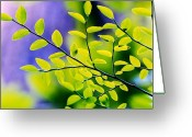 Huckleberry Bushes Greeting Cards - Branches Greeting Card by Vesna Antic