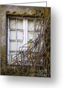 Peeling Greeting Cards - Branchy Window Greeting Card by Carlos Caetano