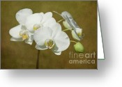 White Orchids Greeting Cards - Brazen Beauty Greeting Card by Reflective Moments  Photography and Digital Art Images