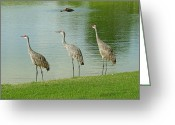 Sandhill Greeting Cards - Breakfast Lunch and Dinner Greeting Card by Adele Moscaritolo
