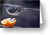 Mocking Greeting Cards - Breakfast Greeting Card by Skip Willits