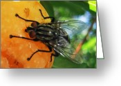 Greek Insects Greeting Cards - Breakfast Time Greeting Card by Eric Kempson