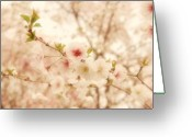 State Flowers Greeting Cards - Breathe - Holmdel Park Greeting Card by Angie McKenzie