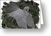 Egret Digital Art Greeting Cards - Breeding Plumage Greeting Card by Larry Linton