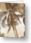 Tropical Photographs Photo Greeting Cards - Breeze Greeting Card by Athala Carole Bruckner