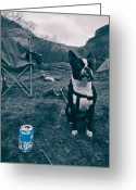 Camping Greeting Cards - BrewDog Bull Greeting Card by Justin Albrecht