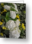 Flower Show Greeting Cards - Bridal Cascade Greeting Card by Vijay Sharon Govender