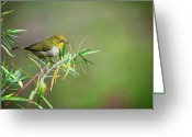Telephoto Greeting Cards - Bright Eyes Greeting Card by Heather Thorning