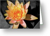 Macro Greeting Cards - Bright Lily iSplash Greeting Card by Kimberly Gonzales