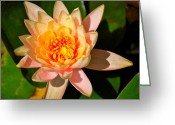 All Greeting Cards - Bright Lily original Greeting Card by Kimberly Gonzales