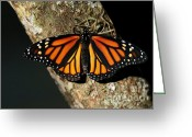 Monarchs Greeting Cards - Bright Orange Monarch Butterfly Greeting Card by Sabrina L Ryan