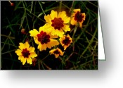 Gold Greeting Cards - Bright Wildflowers Greeting Card by Kimberly Gonzales